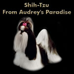 SHIH-TZU FROM AUDREY'S PARADISE